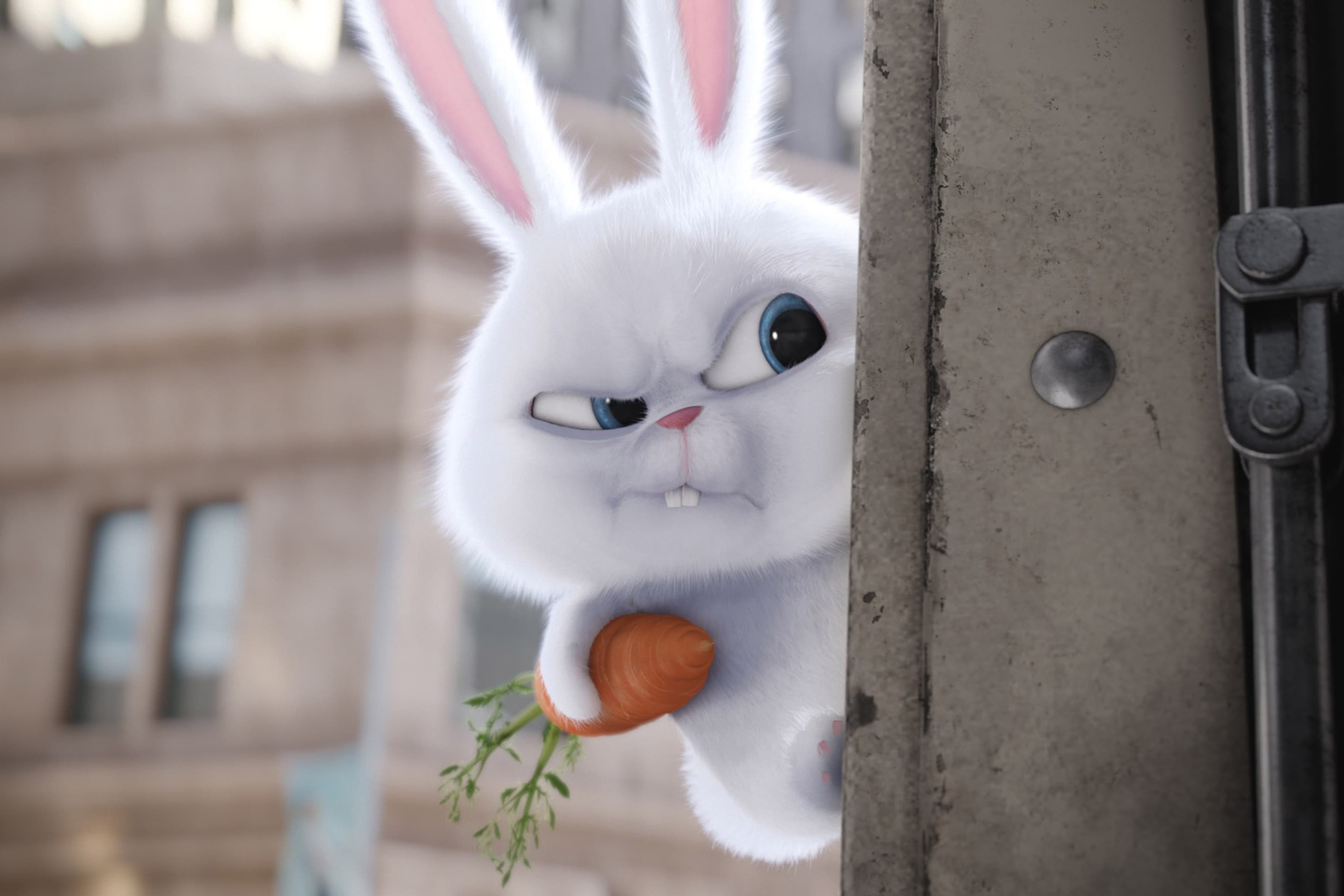 The secret life of pets rabbit angry wallpaper